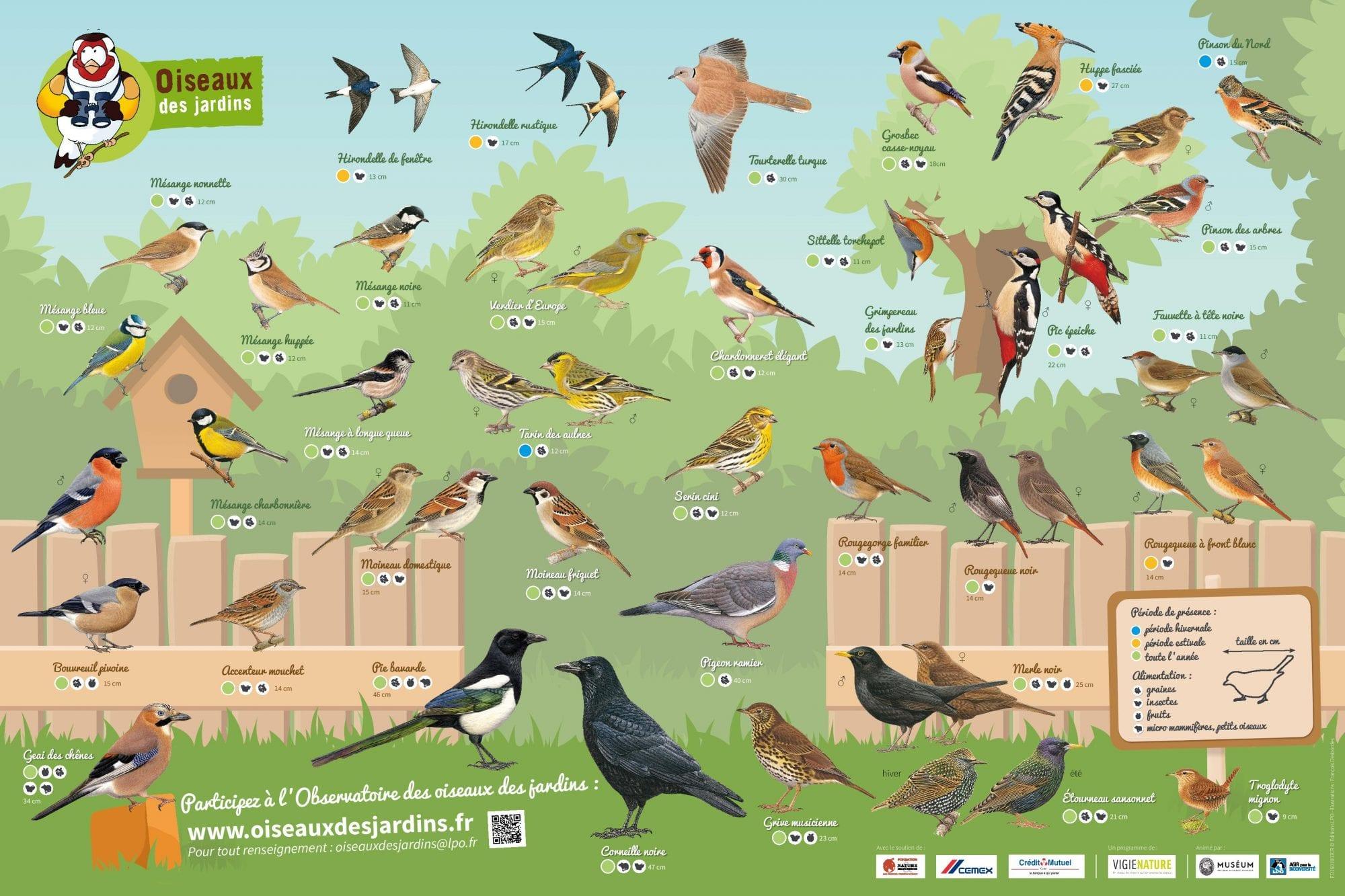 Comptage des oiseaux de jardin - Mairie de Fonsorbes